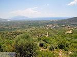 Olijfbomen aan de vlakte bij Pythagorion en Heraion (Ireon) - Eiland Samos - Foto van De Griekse Gids