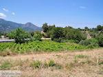 Druivengaarden langs de weg van Marathokampos naar Karlovassi - Eiland Samos