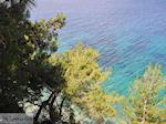 Bomen tot aan het water bij Kokkari (Strand Tsamadou) - Eiland Samos - Foto van De Griekse Gids
