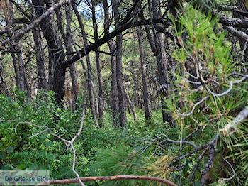 Het bosrijke gebied bij Agios Konstandinos (vallei der nachtegalen) - Eiland Samos - Foto van De Griekse Gids
